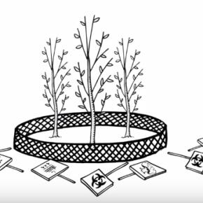 Vidéo : Pourquoi le champ de peupliers OGM est une fausse solution.